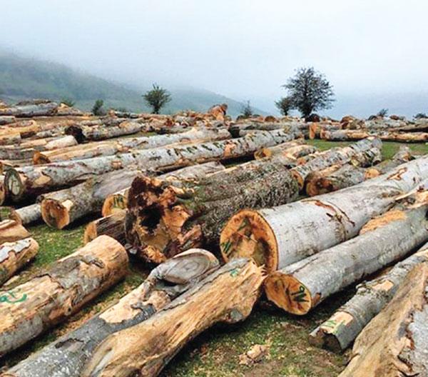 کشف چوب قاچاق در سلطانیه